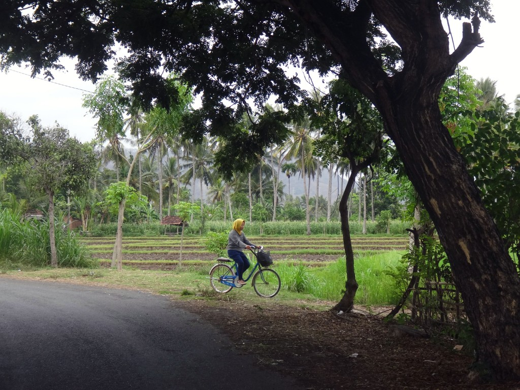 Country life in east Java