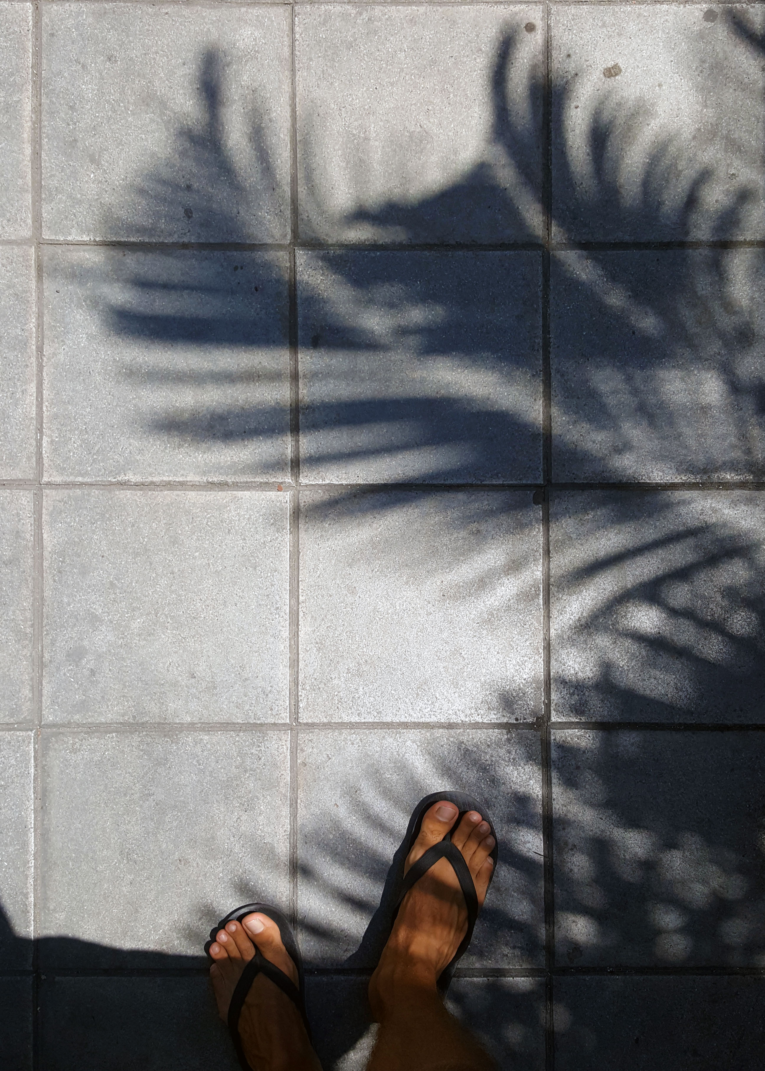 Shadow of a palmtree on the sidewalk