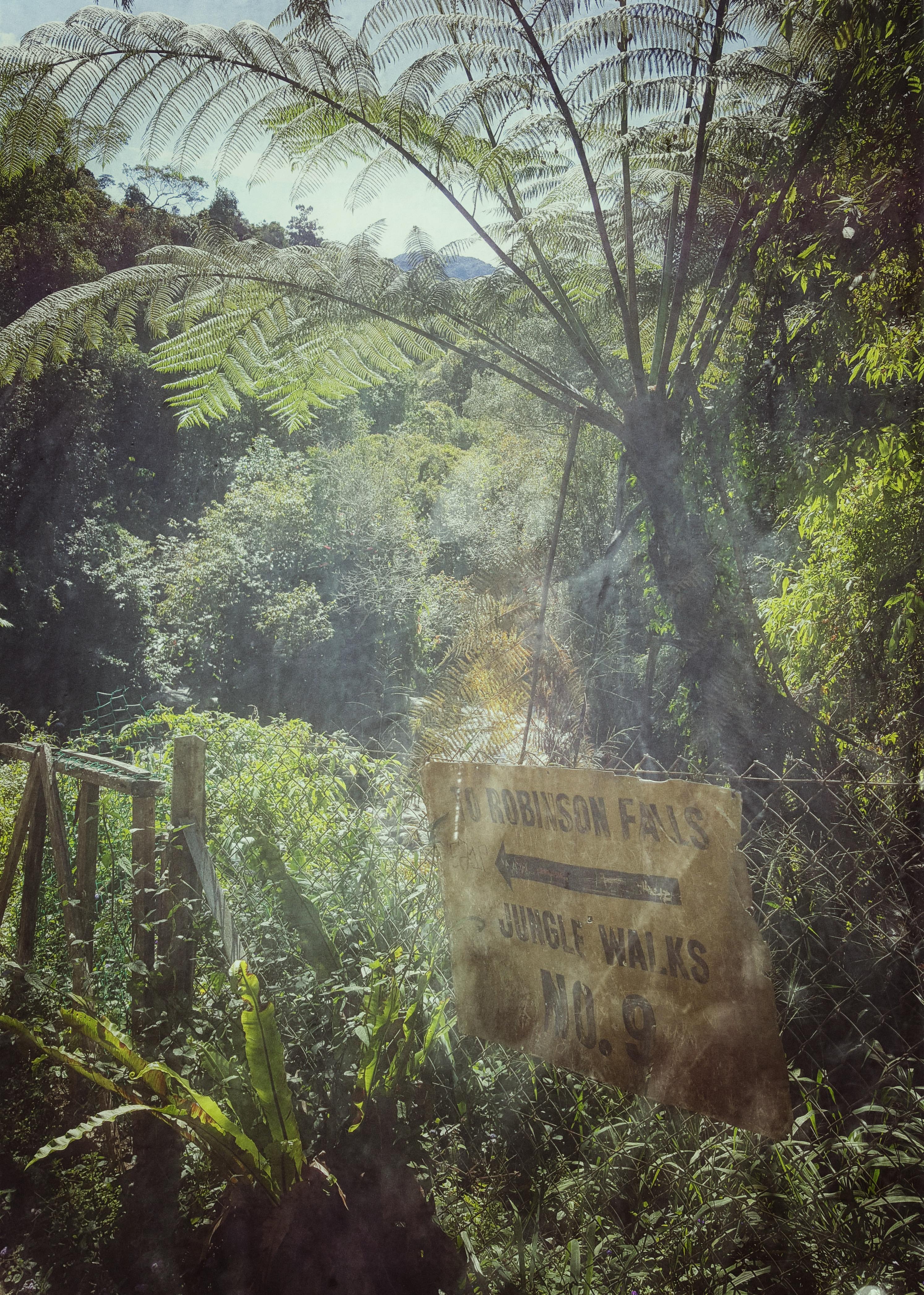 Jungle walk No. 9, Cameron Highlands, Malaysia