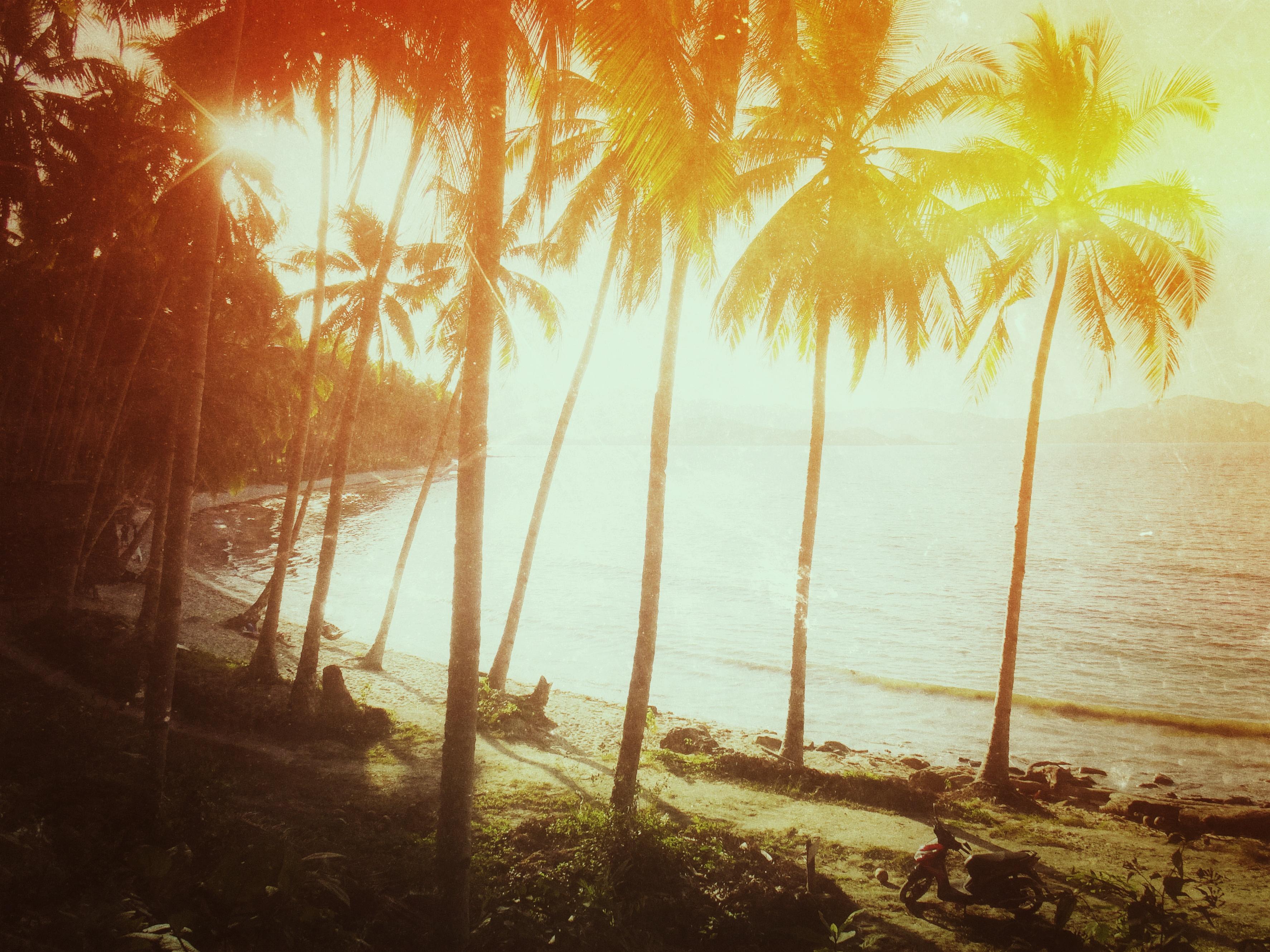 Paradisiac Coconut Beach near Port Barton, Palawan, Philippines