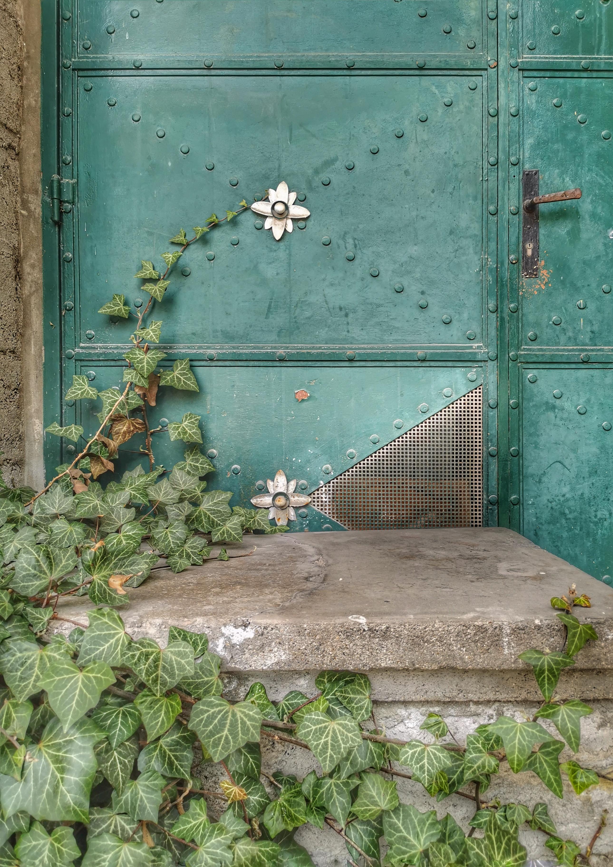 Ivy ranks along a door